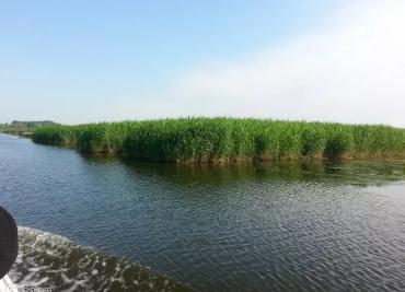 衡水湖、道安寺一日游