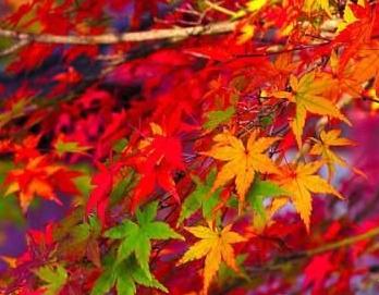 【金秋红叶】红岩岭一日游
